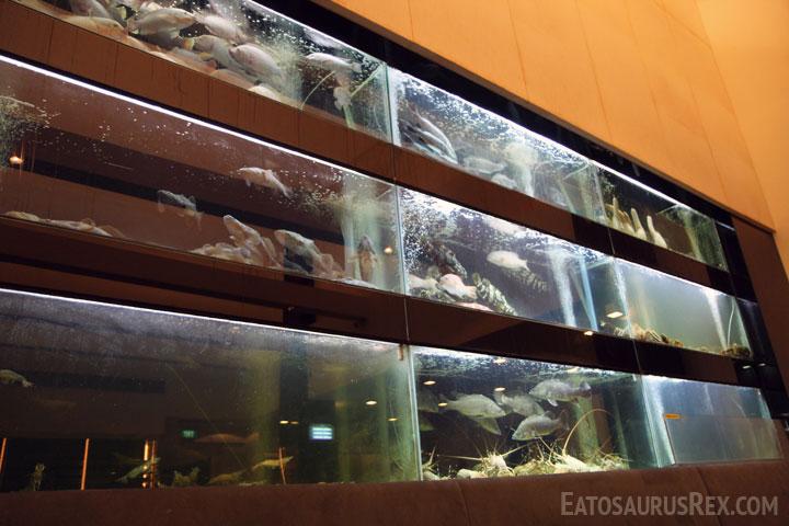 jumbo-seafood-tanks.jpg